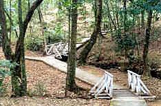 Botanical Garden Shillong Tour Guide Meghalaya