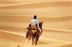 Camel in Desert Jaisalmer Travel Rajasthan