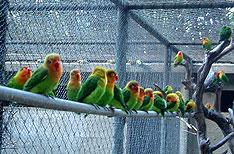 Casela Bird Park Mauritius Wlidlife Tours