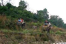 Honeymoon Tour Packages Corbett National Park India