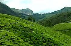 Kumily Periyar National Park Wildlife Travels Thekkady Kerala