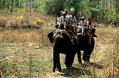 Manas National Park Tours Assam
