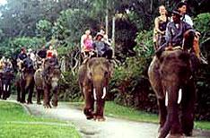 Periyar National Park Wildlife Travel Packages Thekkady Kerala