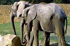 Periyar Wildlife Sanctuary Thekkady Wildlife Packages Kerala