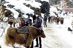 Rohtang Pass Manali Holidays Himachal Pradesh