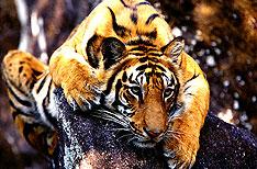 Sawai Madhopur Rajasthan India